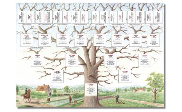 Dessin arbre généalogique © Jean-Bernard Laurent